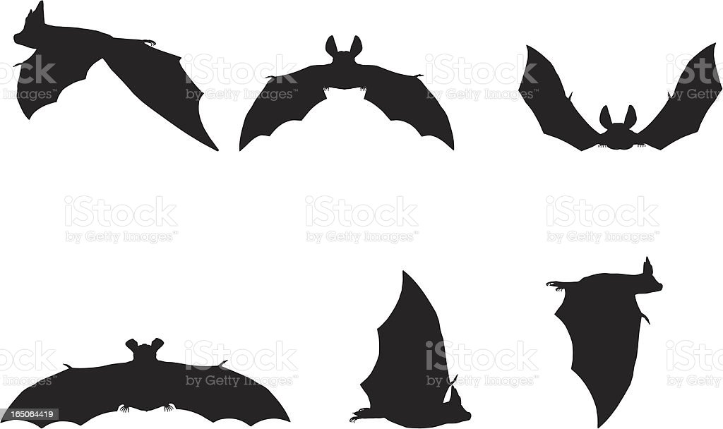 Bat Silhouette Collection royalty-free bat silhouette collection stock vector art & more images of animal