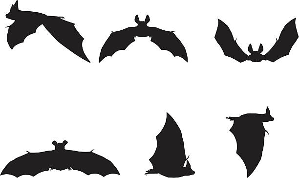 bat silhouette collection - bat stock illustrations, clip art, cartoons, & icons