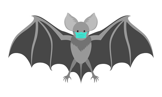 Bat with a medical mask. Flittermouse considered to be eventual cause of coronavirus COVID-19 infection.