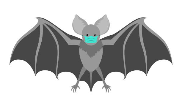 Bat with a medical mask. Flittermouse considered to be eventual cause of coronavirus COVID-19 infection. Bat with a medical mask. Flittermouse considered to be eventual cause of coronavirus COVID-19 infection. Isolated vector illustration in flat style. bat stock illustrations