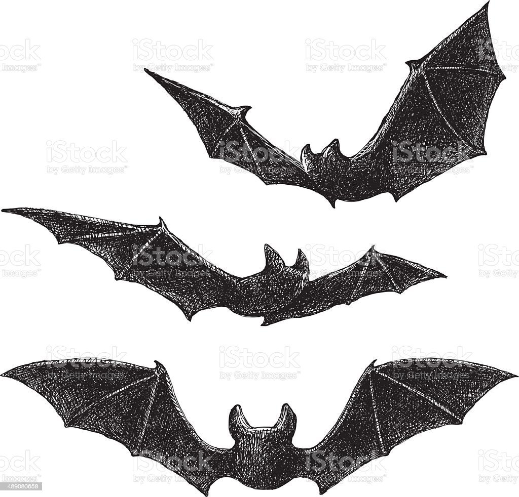 Bats Drawing vector art illustration