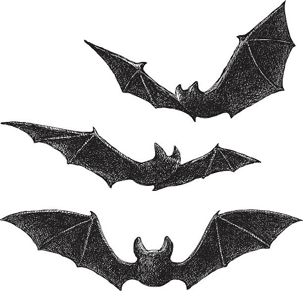 bats drawing - bat stock illustrations, clip art, cartoons, & icons