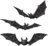 Bats Drawing