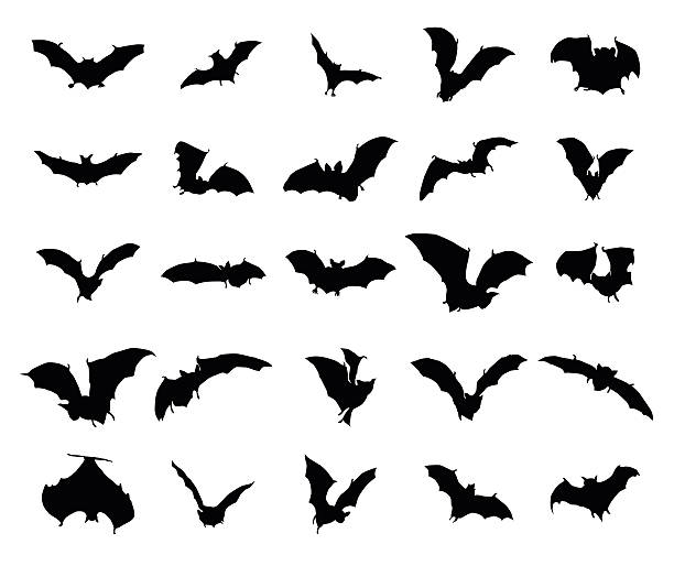 bats silhouettes set - bat stock illustrations, clip art, cartoons, & icons