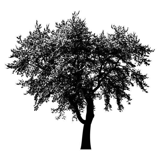 baum silhouette schwarz isoliert vector art illustration tree silhouette