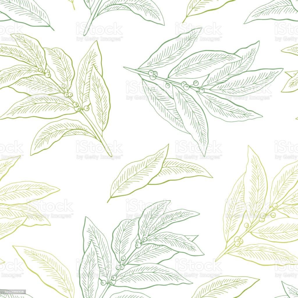 Vetores De Folha De Louro Grafico Cor Verde Sem Costura Padrao