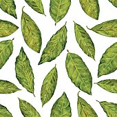 Bay leaf watercolor illustration isolated on white background, Hand drawn seamless pattern, Design food, Organic fresh spice ingredient for healthy market, restaurant menu, kitchen aromatherapy