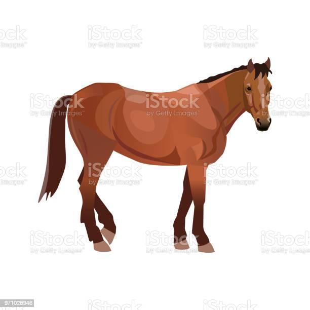 Bay thoroughbred horse vector id971028946?b=1&k=6&m=971028946&s=612x612&h=c9wiwkiunsygqnhbhy5ymdpelujrvxv7lhwgnn m5pq=