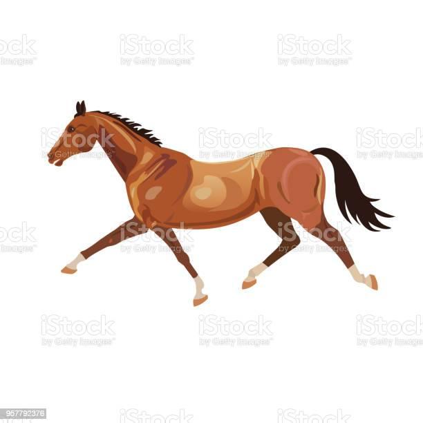 Bay trotting horse vector id957792376?b=1&k=6&m=957792376&s=612x612&h=bhkgn ijcrfmlhsgvrbynikddmjxqk tg imsmodmsu=