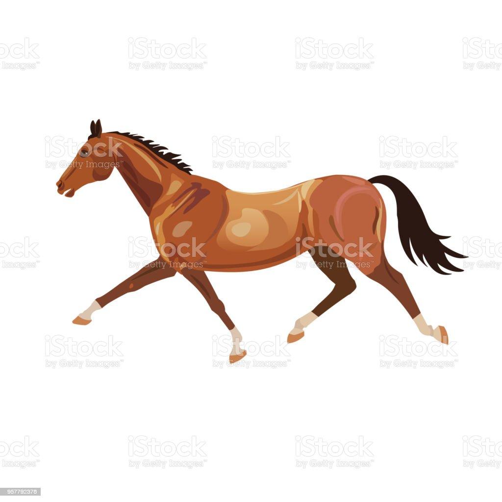 Best Harness Racing Illustrations  Royalty-free Vector Graphics  U0026 Clip Art