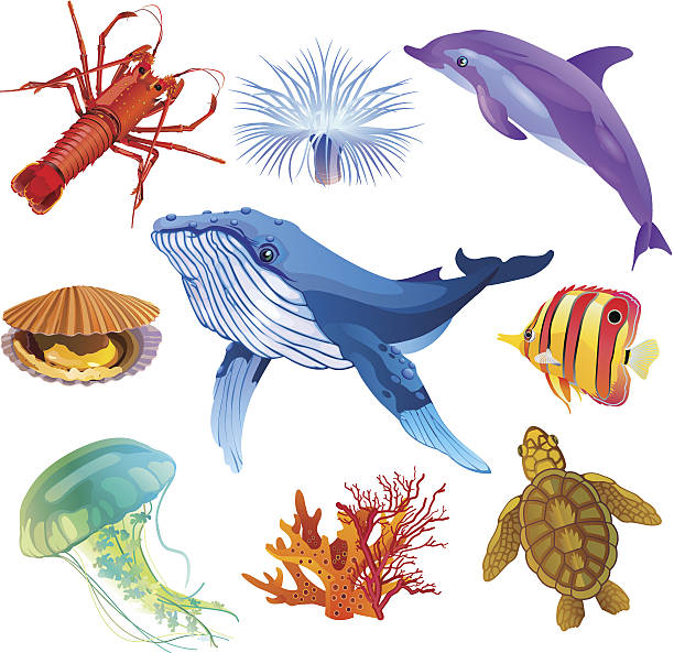 Be wildlife Fine colorful icon set with 9 sea animals: Fish, Dolphin, Whale, Shell, Lobster, Coral, Sea turtle,Sea anemone and Jellyfish marine life stock illustrations