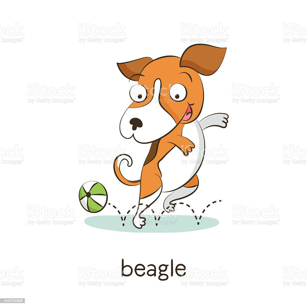 Beagle. Perro carácter aislado sobre blanco - ilustración de arte vectorial