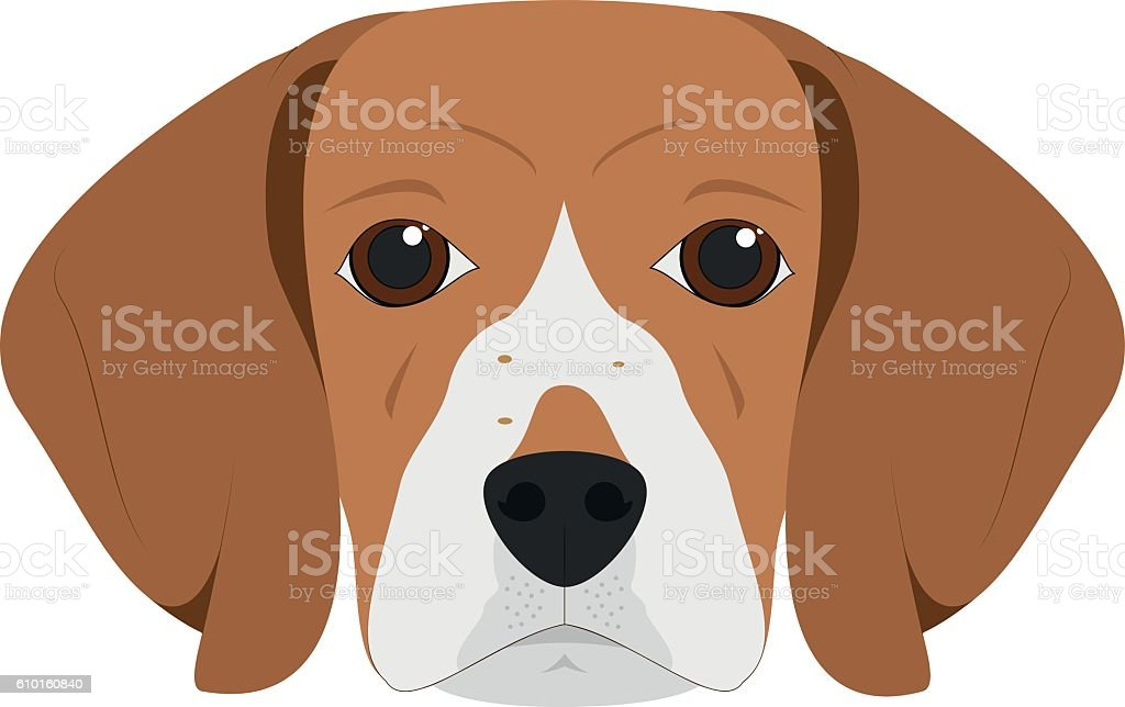 Beagle dog isolated on white background vector illustration - ilustración de arte vectorial