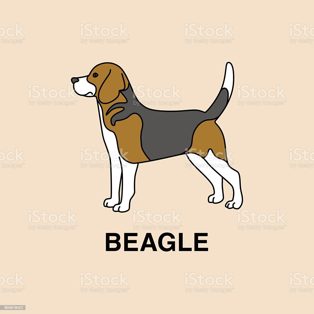 Beagle dog standing in profile pose. - ilustración de arte vectorial