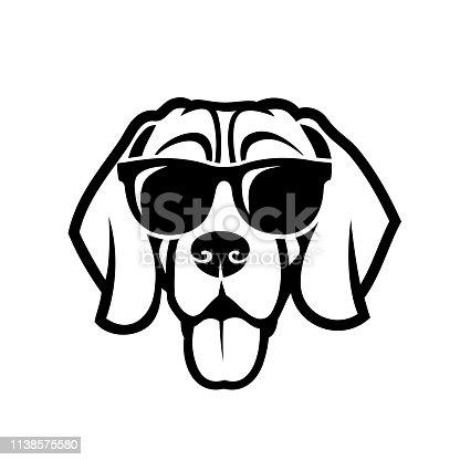 Beagle dog wearing sunglasses
