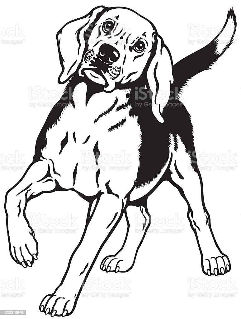 Beagle Hund Schwarzweiß Stock Vektor Art Und Mehr Bilder Von