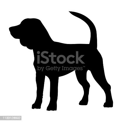 Beagle purebred dog standing in side view - vector silhouette isolated