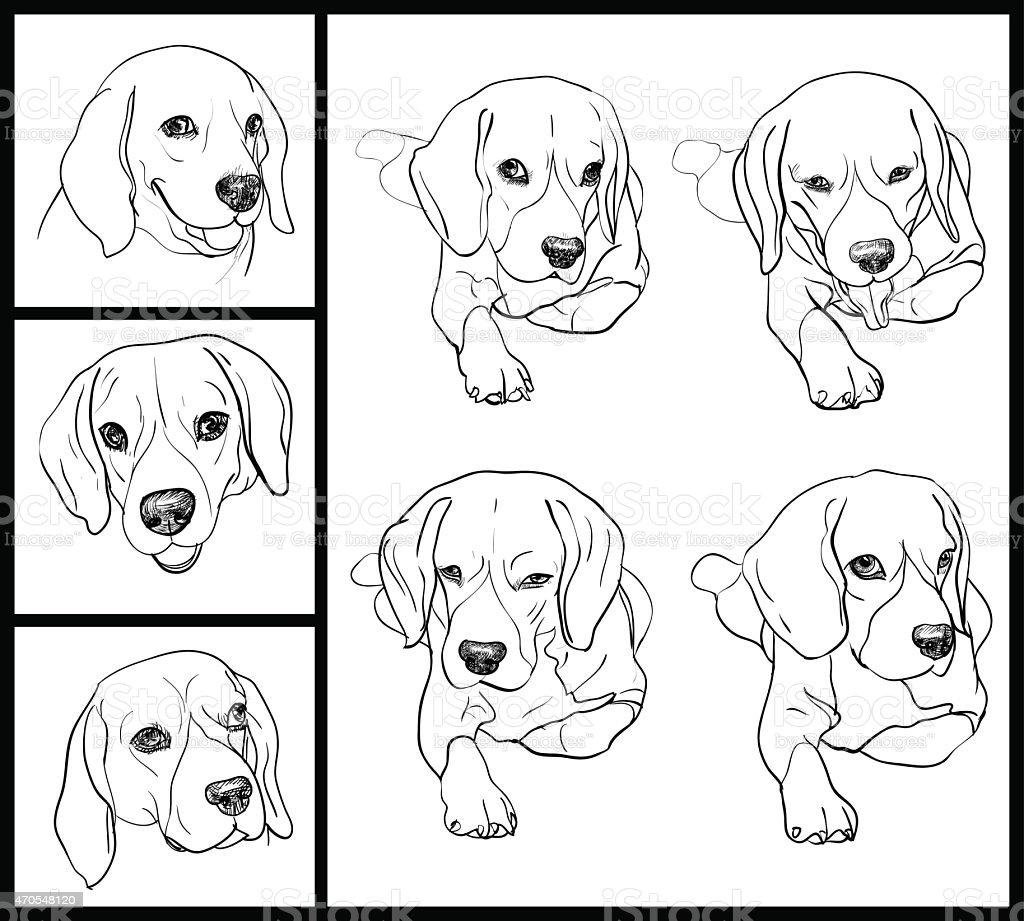 Beagle vector art illustration