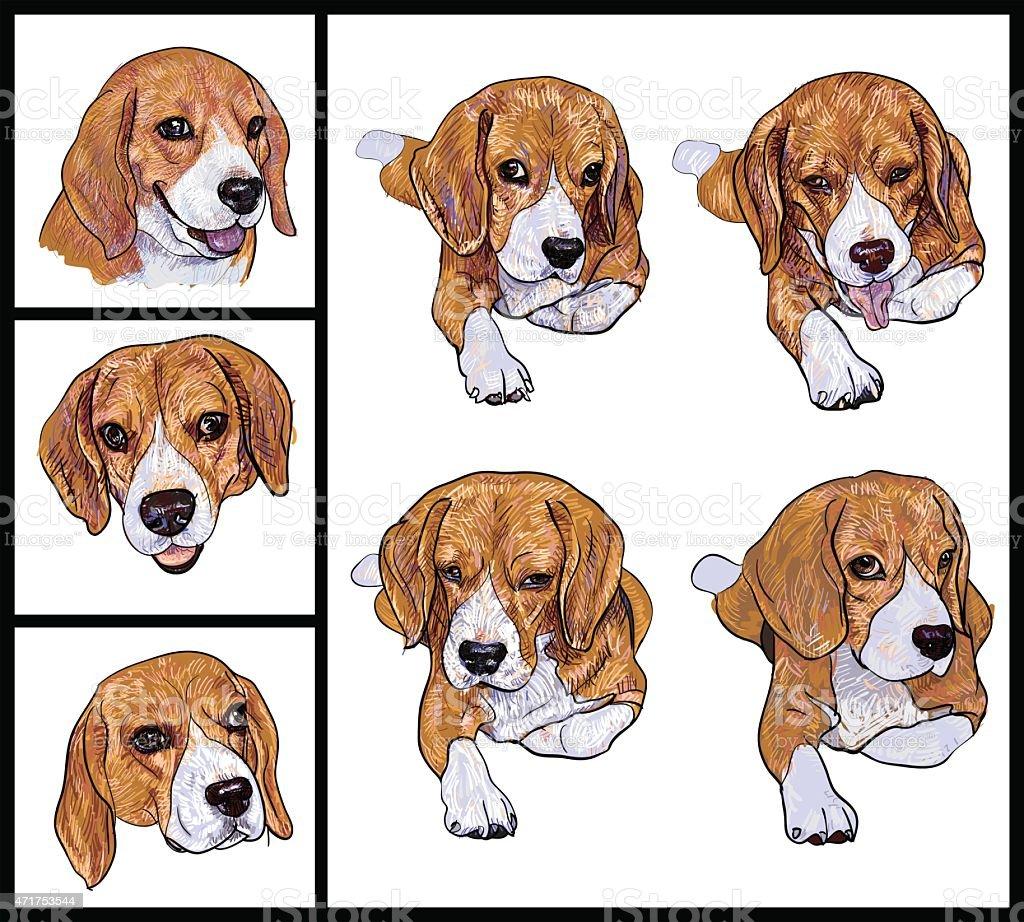 Beagle - ilustración de arte vectorial