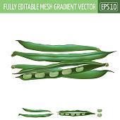 Bean on white background. Vector illustration