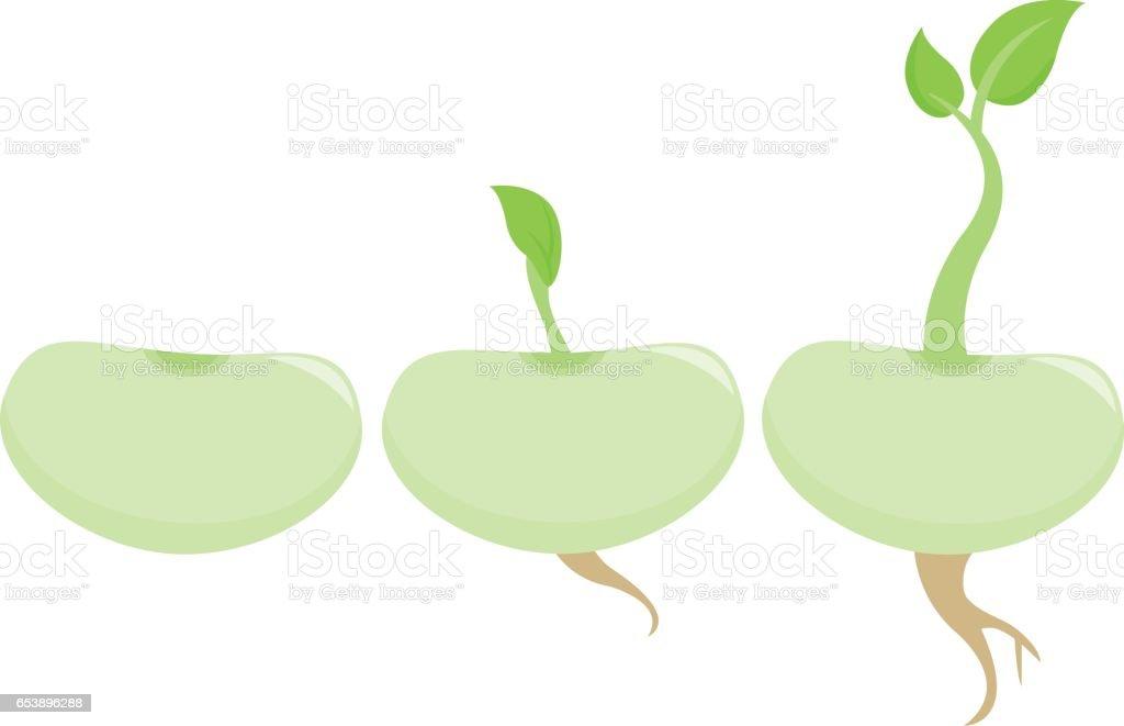 Bean sprouts vector art illustration