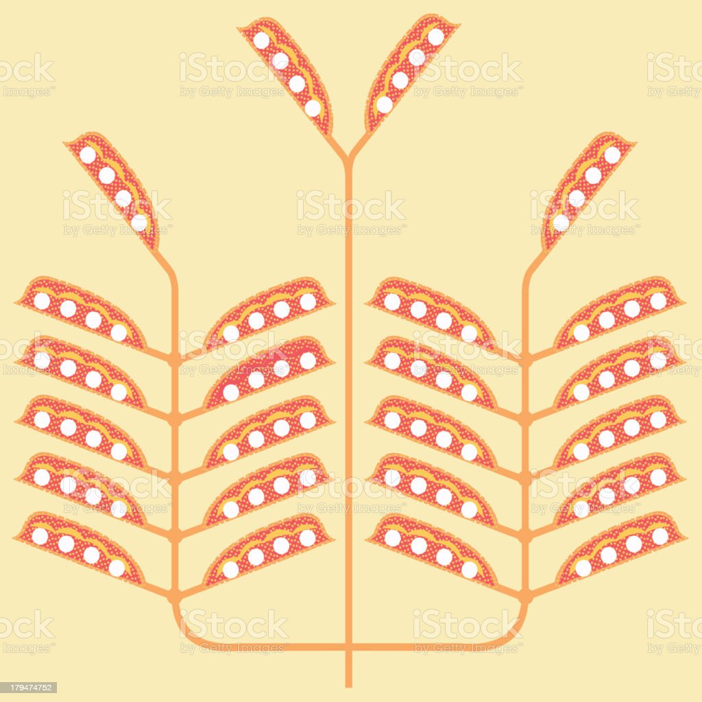 bean-pod pattern royalty-free beanpod pattern stock vector art & more images of agriculture