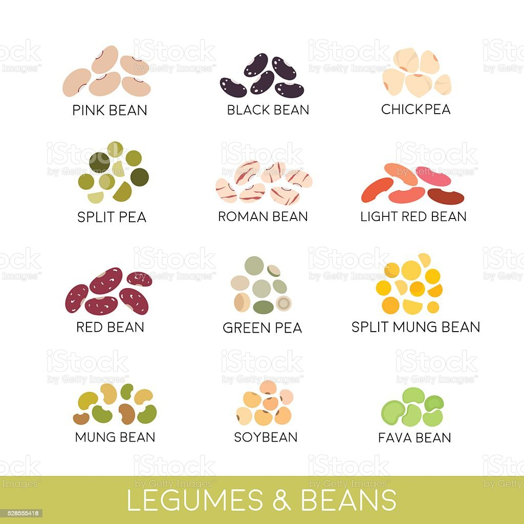 Beans and legumes Set. Vector illustration isolated on white向量藝術插圖
