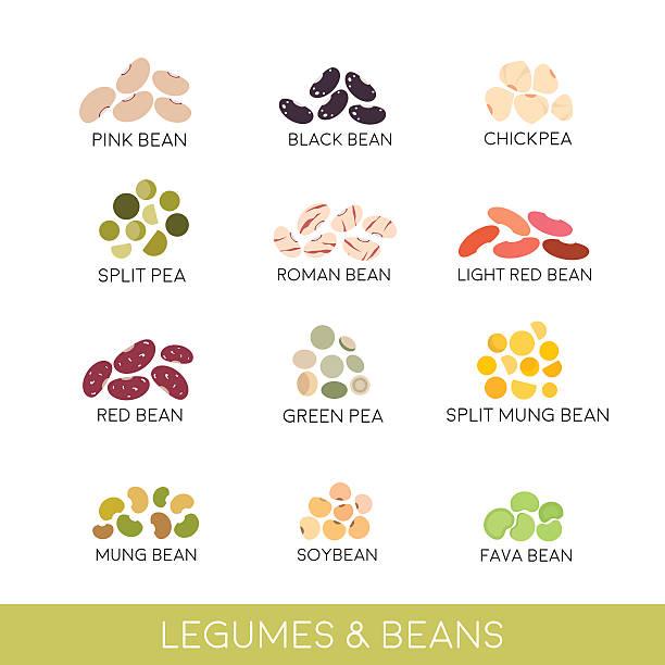 ilustrações de stock, clip art, desenhos animados e ícones de feijões cozidos e de leguminosas para grão. vector ilustração isolado a branco - feijão