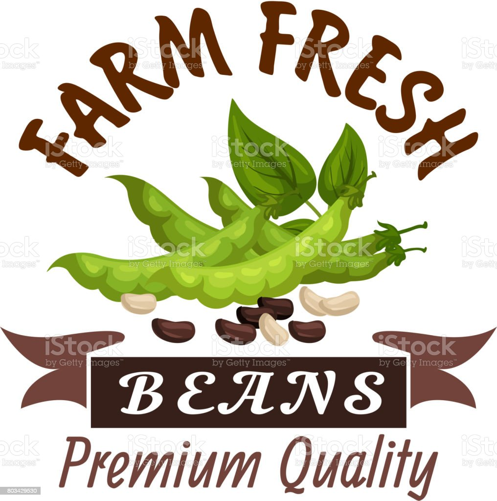 Beans or legume soybeans vector poster or emblem vector art illustration