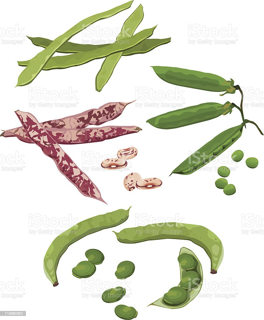 Beans vector art illustration
