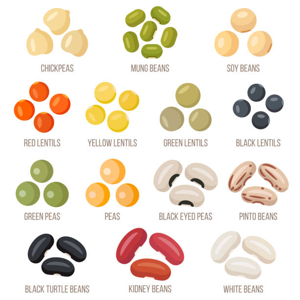 Beans Vector set of legumes. Flat style. chick pea stock illustrations