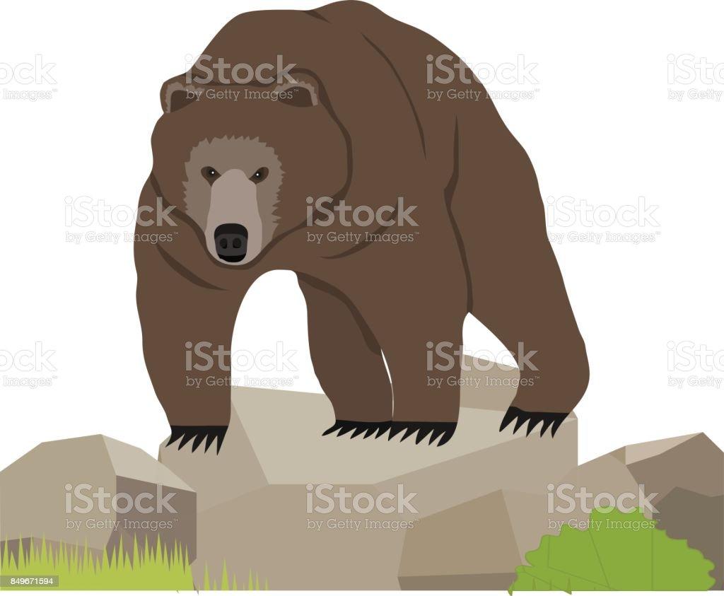 Bear, a realistic bear on the stone. vector art illustration