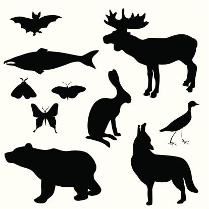 Bear Bat Jack Rabbit Vector Silhouette