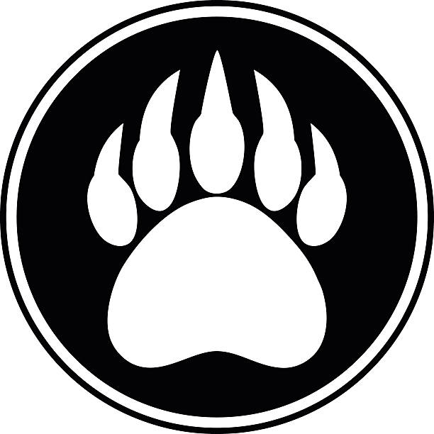 Best Bear Paws Illustrations, Royalty-Free Vector Graphics
