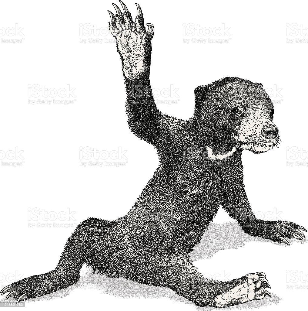 Bear Cub vector art illustration