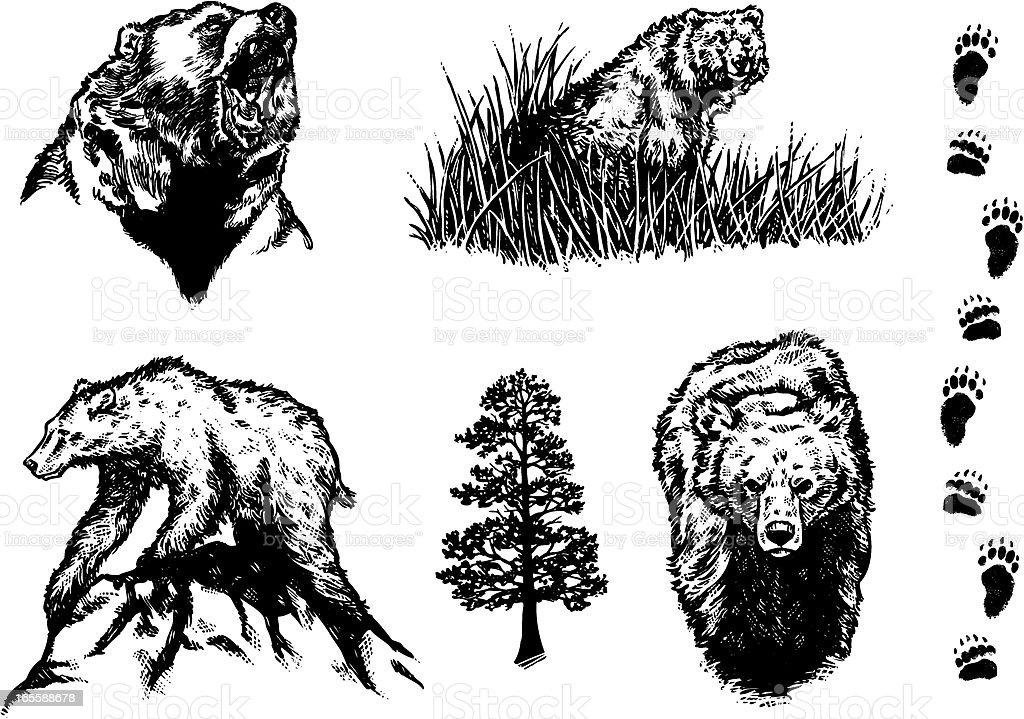 Bear Design Elements royalty-free stock vector art