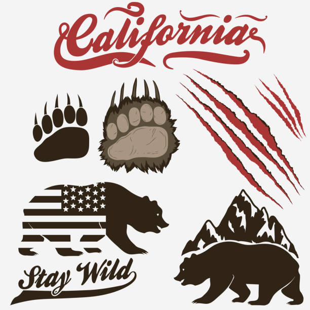 420 Bear Scratch Illustrations Clip Art Istock