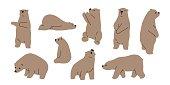 Bear grizzly polar bear teddy icon illustration doodle
