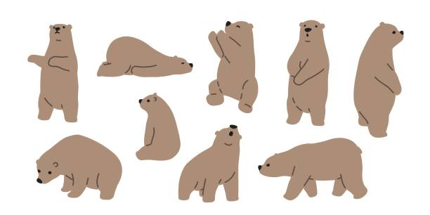 bear grizzly polar bear teddy icon illustration doodle - bear stock illustrations