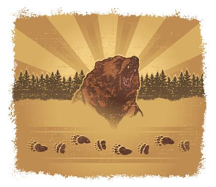 Bear Grunge Stockvectorkunst en meer beelden van Beer