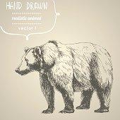 Bear. Hand drawn vector illustration.