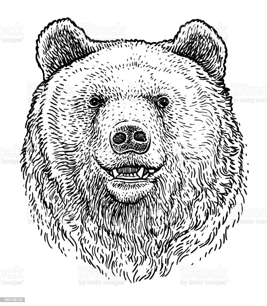 Bear head illustration, drawing, engraving, ink, line art, vector vector art illustration