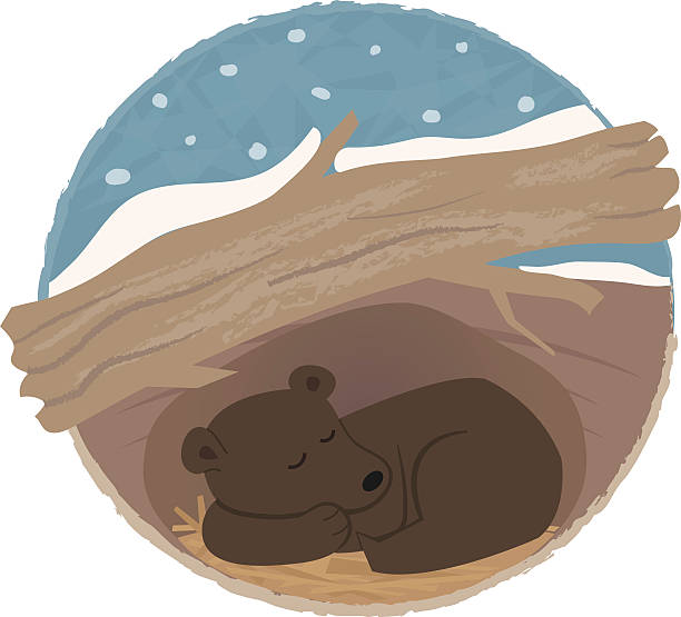 bear hibernating - hibernation stock illustrations
