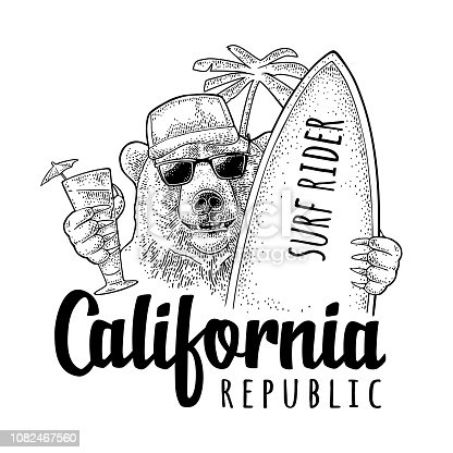 Bear dressed in a baseball cap, sunglasses holding surfboard and cocktail with umbrella. California republic handwriting lettering. Vintage black engraving illustration on white for t-shirt or poster