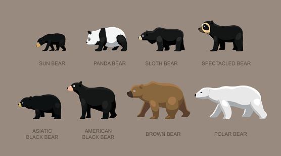 Bear Sizes Cartoon Vector Illustration