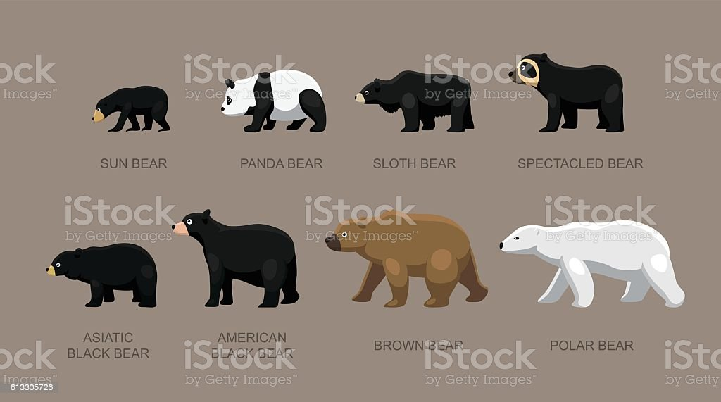 Bear Sizes Cartoon Vector Illustration vector art illustration