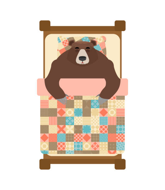 bear sleeps in bed. sleeping grizzly. vector illustration - hibernation stock illustrations, clip art, cartoons, & icons