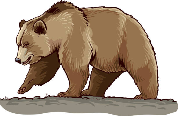 Grizzly Bear Vector Art Graphics Freevector Com