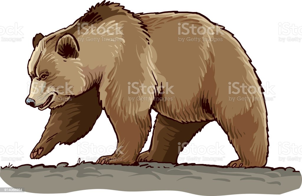 Bear - Illustration vectorielle