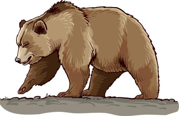 bear - bear stock illustrations
